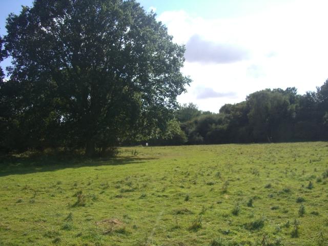 Through Hatfield Forest